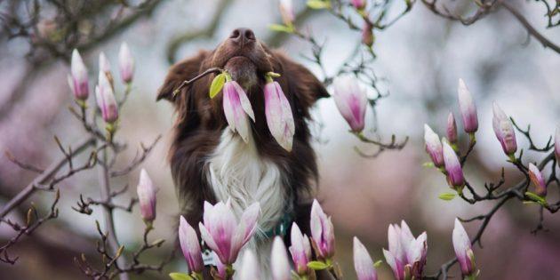 Как делать красивые фото собак: настройтесь на съёмку