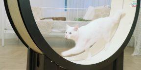 Видео дня: умная беговая дорожка для котов The Little Cat