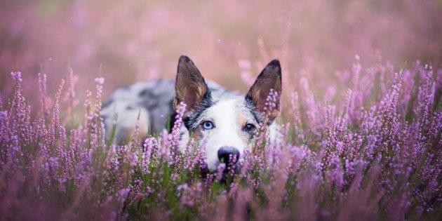Как делать красивые фото собак: модели необходима мотивация