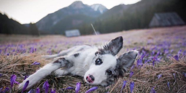 Как делать красивые фото собак: камера и объектив имеют значение