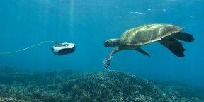 Штука дня: дрон для подводной съёмки, управляемый при помощи смартфона