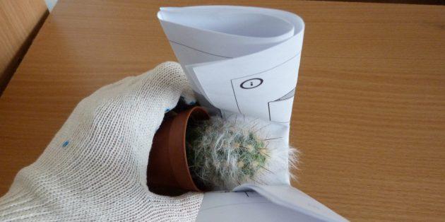 Как ухаживать за кактусом: Как пересаживать кактус