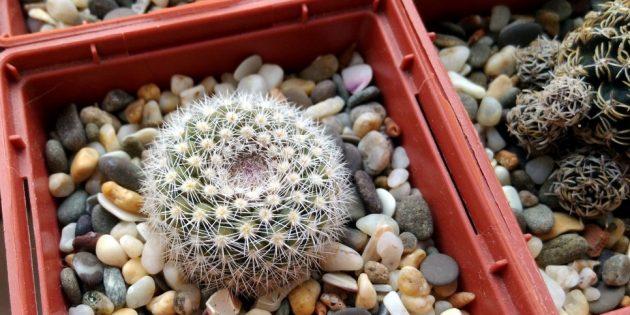 Как ухаживать за кактусом: Горшок для кактуса