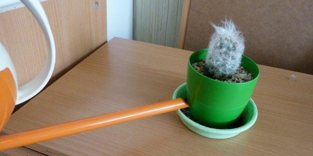 Как ухаживать за кактусом: Нижний полив