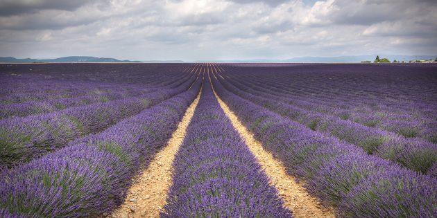 Куда поехать в Европе: Лавандовые поля, Прованс, Франция