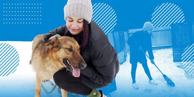 Как помочь бездомным животным