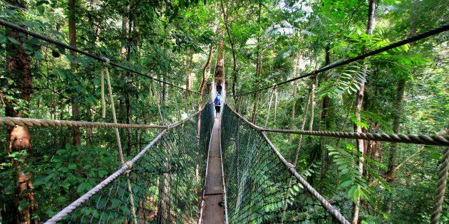 Территория Азии не зря привлекает туристов: национальный парк Таман-Негара, Малайзия