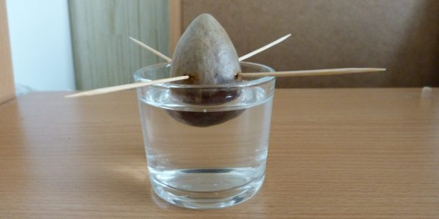 Как вырастить авокадо из косточки: Косточка в воде
