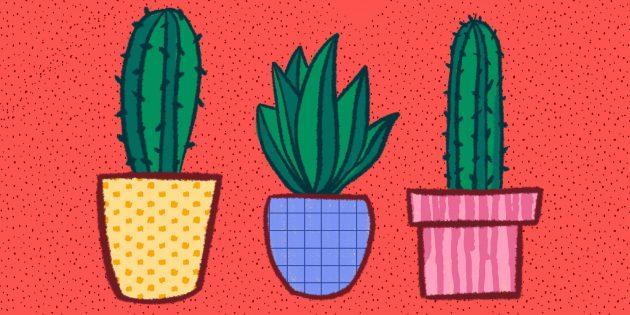 Как ухаживать за кактусом: исчерпывающее руководство