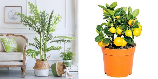 Что подарить бабушке на 8Марта: Комнатные цветы или горшок
