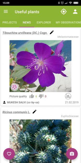 Определяйте виды комнатных растений с помощью PlantNet