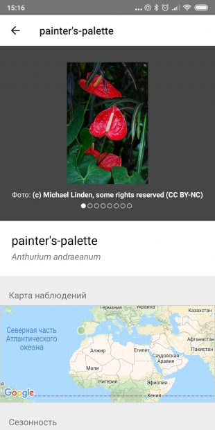 Определяйте виды комнатных растений с помощью iNaturalist