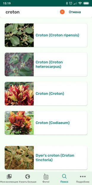 Определяйте виды комнатных растений с помощью PlantSnap