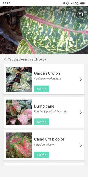 Определяйте виды комнатных растений с помощью PictureThis