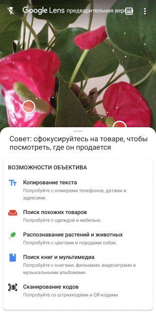 Определяйте виды комнатных растений с помощью Google Объектив