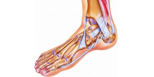 Что делать, если подвернул ногу: Голеностопный сустав