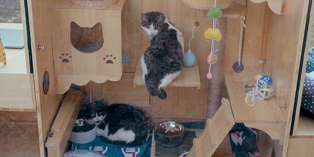 Умный дом для котов: Постояльцы