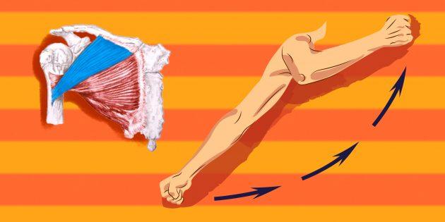 Упражнения на грудные мышцы: для дополнительной нагрузки на волокна ключичной головки нужно переводить плечо вперёд по направлению снизу вверх