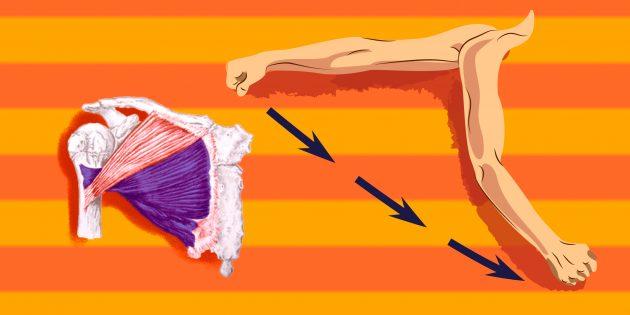 Упражнения на грудные мышцы: чтобы больше нагрузить нижнюю часть грудной мышцы, надо отведённое в сторону плечо перевести вперёд и вниз