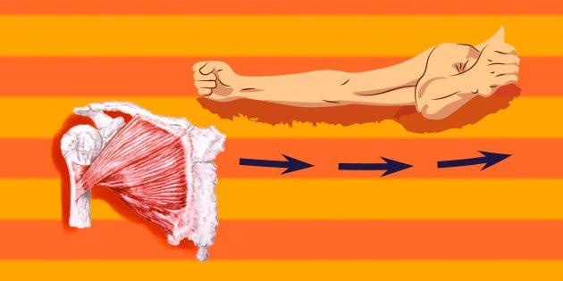 Упражнения на грудные мышцы: Чтобы грудь стала рельефной, надо качать большие грудные мышцы