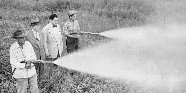 Химическая промышленность: ДДТ имел большую популярность