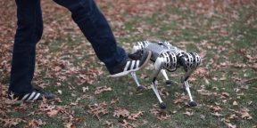 Видео дня: четвероногий робот MIT освоил сальто назад
