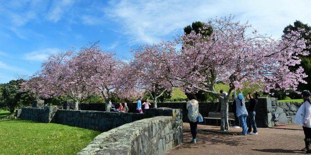 Куда поехать в апреле: Киото, Япония