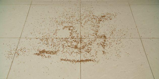 Про робот-пылесос отзывы найти несложно, но личный опыт лучше: испытание № 3 — рассыпанная крупа