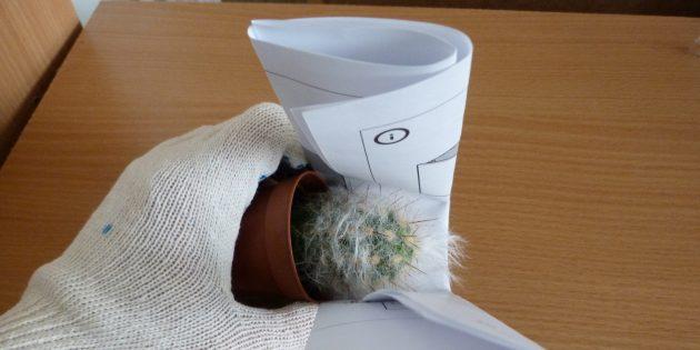 Как пересадить цветок: если пересаживаете кактус, берите его с помощью свёрнутой бумаги