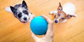 Штука дня: автоматический мяч, который развлечёт питомца в ваше отсутствие
