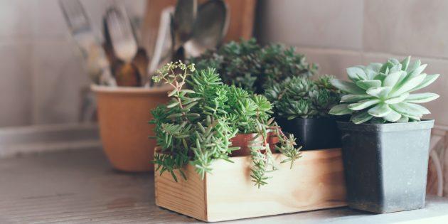 Отпуск дома: Начните разводить цветы