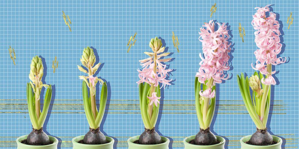 Садовые луковичные цветы многолетники: фото и названия видов