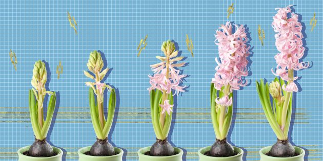 10 луковичных цветов, которые украсят ваш дом