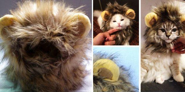 Львиная грива для кота
