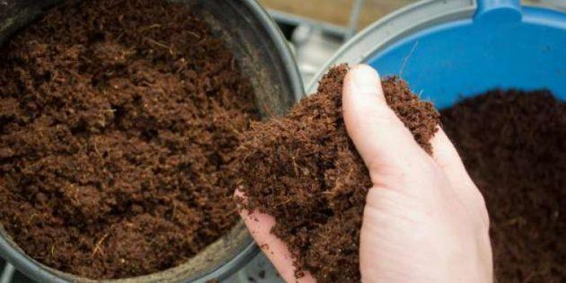 Как выращивать росянку в домашних условиях?