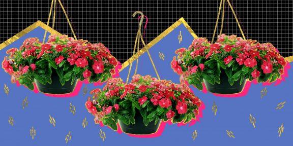 10 цветов, которые стоит посадить на балконе
