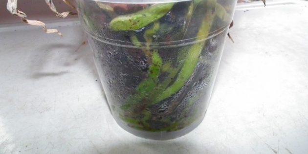 Как поливать орхидею: индикатор — отсутствие капелек влаги на стенках внутри горшка