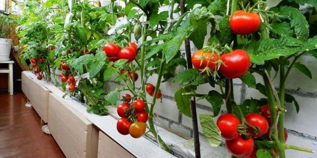 балкон сад