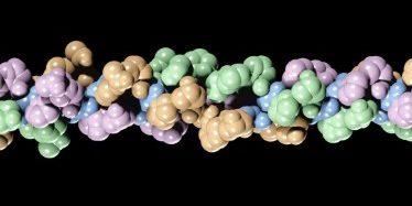 Что такое коллаген и зачем он нужен коже: фибриллы — длинные и тонкие белковые волокна