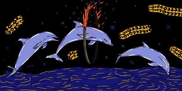 Дельфинарий — издевательство над животными