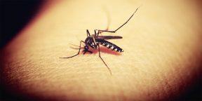 Почему нас кусают комары и как с этим бороться