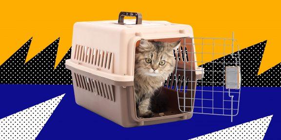 Как перевозить животных в самолёте: подробная инструкция