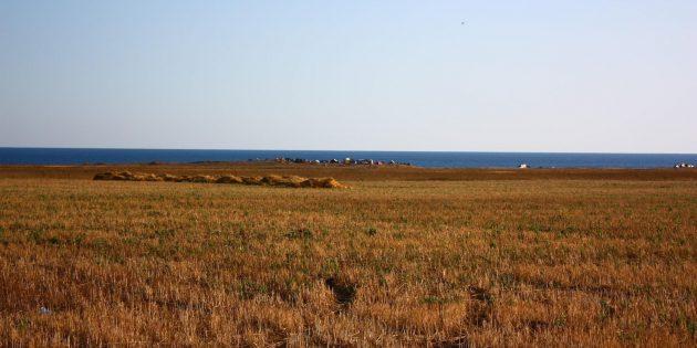 Раскопки около Черноморского