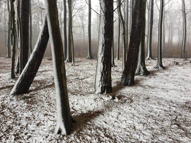 Лучшее фото на айфон в категории «Деревья»