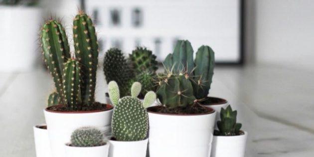 Суккуленты: кактусы отлично подходят для спальни
