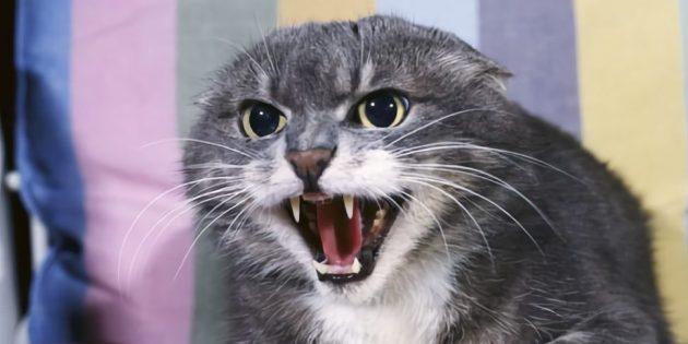 Во время агрессии, которая вызвана страхом, кошка пытается защитить себя