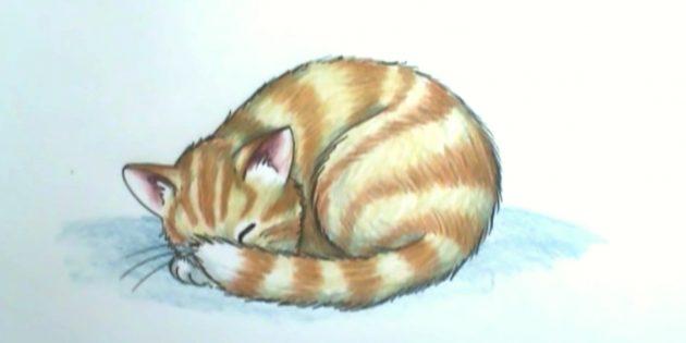 Как нарисовать спящую кошку в реалистичном стиле