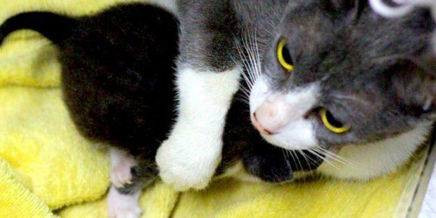 Кошки защищают своих котят от любых посягательств
