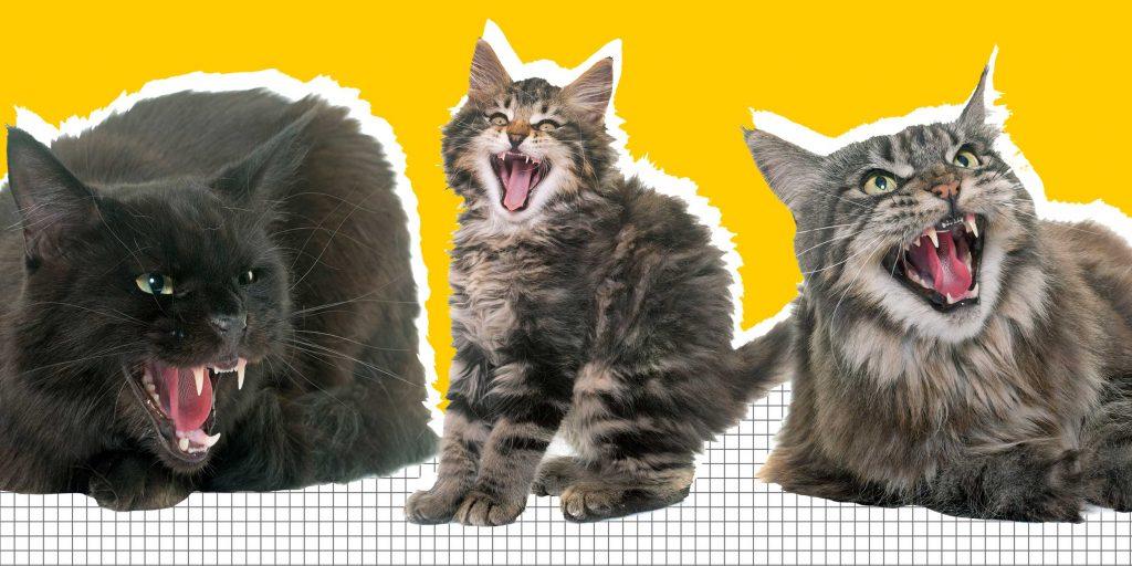 Как бороться с проявлениями агрессии у кошек