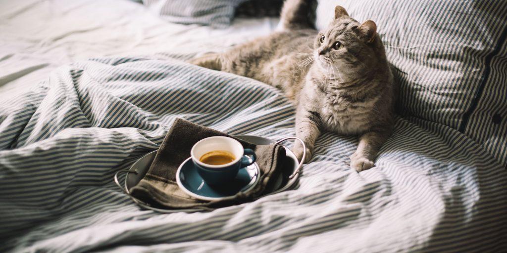 Как научиться разбираться в <b>кофе</b> - Лайфхакер